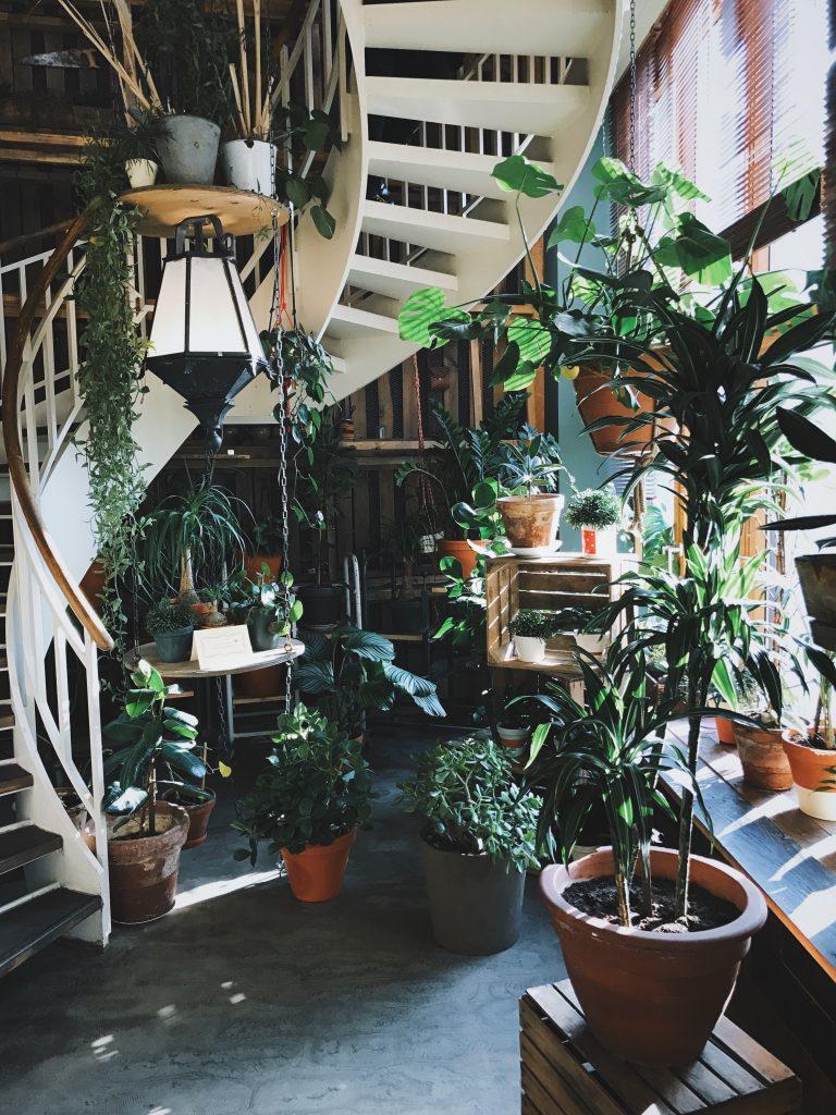 Un piece remplie de plantes vertes